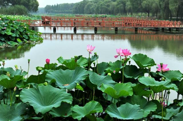 洪湖蓝田生态旅游风景区, 国家4a级旅游风景区,全国农业旅游示范